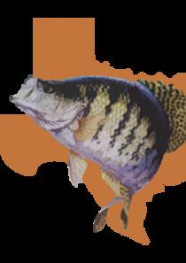 Crappie Anglers of Texas Membership
